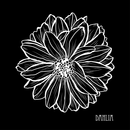 Decorative dahlia flowers, design elements. Can be used for cards, invitations, banners, posters, print design. Floral background in line art style