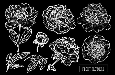 Decorative peony  flowers set, design elements. Can be used for cards, invitations, banners, posters, print design. Floral background in line art style