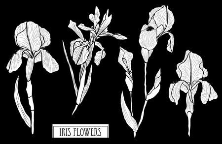 Decorative iris flowers set, design elements. Can be used for cards, invitations, banners, posters, print design. Floral background in line art style Vetores