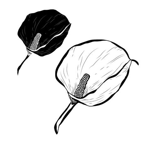 Decorative calla flowers set, design elements. Can be used for cards, invitations, banners, posters, print design. Floral background in line art style Illustration