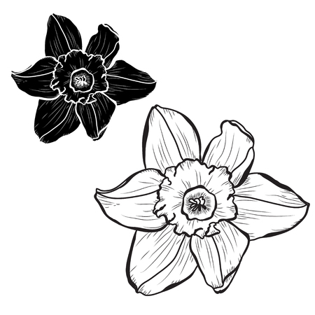 Decorative daffodil flowers set, design elements. Can be used for cards, invitations, banners, posters, print design. Floral background in line art style