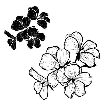 Decorative geranium flowers set, design elements. Can be used for cards, invitations, banners, posters, print design. Floral background in line art style