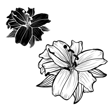 Decorative lily flowers set, design elements. Can be used for cards, invitations, banners, posters, print design. Floral background in line art style