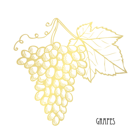 Hand drawn golden grapes, design element. Can be used for cards, invitations, scrapbooking, print, fabric, manufacturing, food themes. Food theme. Golden fruits