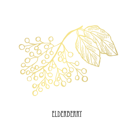 Hand drawn golden elderberry, design element. Can be used for cards, invitations, scrapbooking, print, fabric, manufacturing, food themes. Food theme. Golden fruits