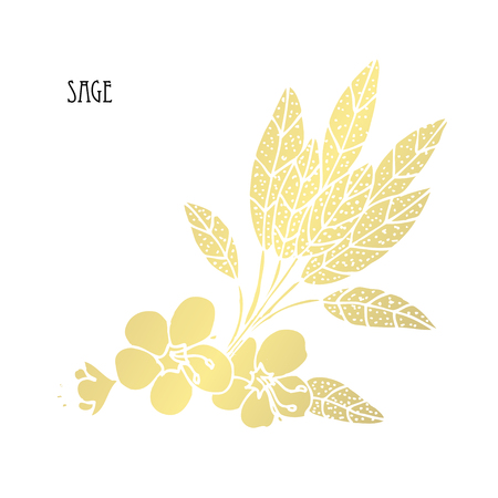 Hand drawn golden sage, design element. Can be used for cards, invitations, gift wrap, print, scrapbooking. Food theme. Golden spices Illustration