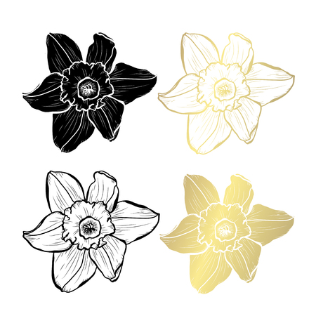 Decorative daffodil flowers, design elements. Can be used for cards, invitations, banners, posters, print design. Golden flowers Ilustracja