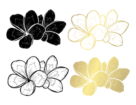 Decorative plumeria  flowers, design elements. Can be used for cards, invitations, banners, posters, print design. Golden flowers