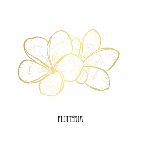 Decorative plumeria  flowers, design elements. Can be used for cards, invitations, banners, posters, print design. Golden flowers Banque d'images - 113394320