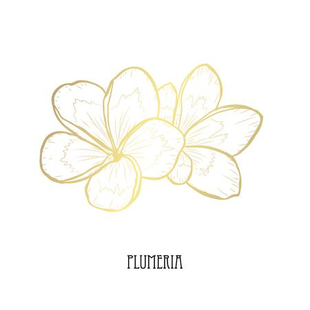 Fleurs de plumeria décoratives, éléments de conception. Peut être utilisé pour les cartes, les invitations, les bannières, les affiches, la conception imprimée. Fleurs dorées