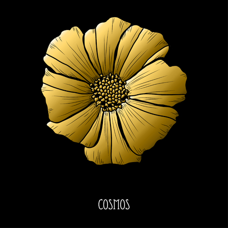 Decorative cosmos  flower, design element. Can be used for cards, invitations, banners, posters, print design. Golden flowers  イラスト・ベクター素材