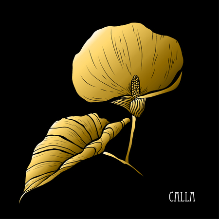 Decorative calla flower, design element. Can be used for cards, invitations, banners, posters, print design. Golden flowers Illustration