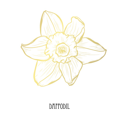 Decorative daffodil flower, design element. Can be used for cards, invitations, banners, posters, print design. Golden flowers