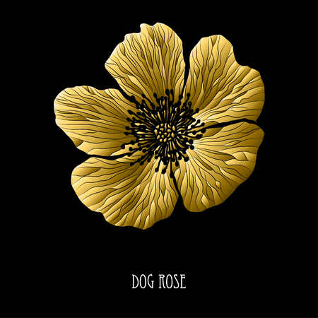 Decorative dog rose flower, design element. Can be used for cards, invitations, banners, posters, print design. Golden flowers  イラスト・ベクター素材