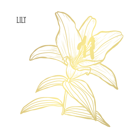 Decorative lily flower, design element. Can be used for cards, invitations, banners, posters, print design. Golden flowers Ilustração