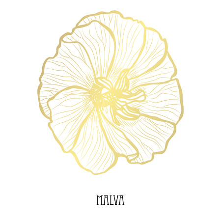 Decorative malva flower, design element. Can be used for cards, invitations, banners, posters, print design. Golden flowers