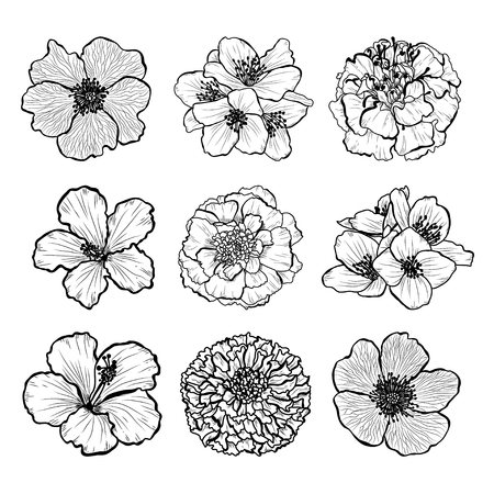 Decorative hand drawn flowers set, design elements. Can be used for cards, invitations, banners, posters, print design. Floral background in line art style Vettoriali