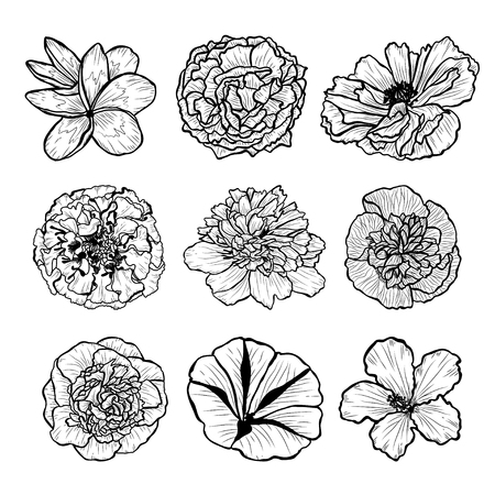 Decorative hand drawn flowers set, design elements. Can be used for cards, invitations, banners, posters, print design. Floral background in line art style