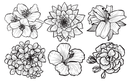 Decorative  flowers set, design elements. Can be used for cards, invitations, banners, posters, print design. Floral background in line art style Archivio Fotografico - 117829222