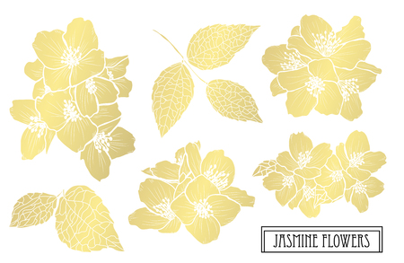Decorative jasmine  flowers, design elements. Can be used for cards, invitations, banners, posters, print design. Golden flowers