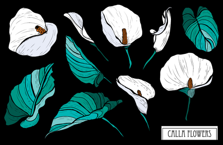 Decorative calla flowers set, design elements. Can be used for cards, invitations, banners, posters, print design. Floral background in line art style Stock Illustratie