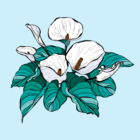 Decorative calla  flowers, design elements. Can be used for cards, invitations, banners, posters, print design. Floral bouquet Ilustração