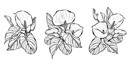 Decorative calla  flowers, design elements. Can be used for cards, invitations, banners, posters, print design. Floral bouquets set Illustration