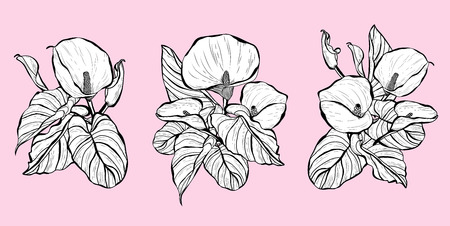 Decorative calla  flowers, design elements. Can be used for cards, invitations, banners, posters, print design. Floral bouquets set Stock Illustratie
