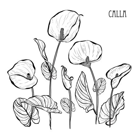Decorative calla  flowers, design elements. Can be used for cards, invitations, banners, posters, print design. Floral bouquet  イラスト・ベクター素材