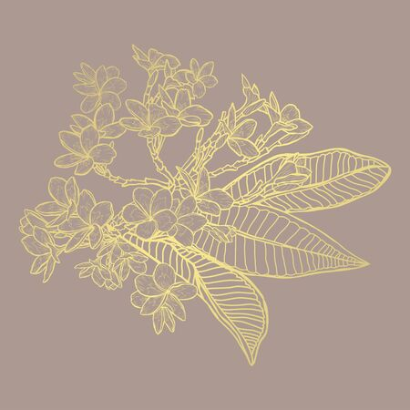 Fleurs de plumeria dorées abstraites décoratives, éléments de conception. Peut être utilisé pour les cartes, les invitations, les bannières, les affiches, la conception imprimée. Fond floral doré dans le style d'art en ligne