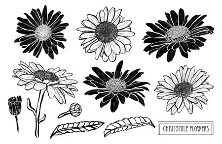 Decorative hand drawn chamomile flowers set, design elements. Can be used for cards, invitations, banners, posters, print design. Floral background in line art style