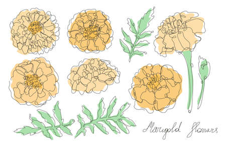 Decorative hand drawn marigold flowers set, design elements. Can be used for cards, invitations, banners, posters, print design. Continuous line art style 向量圖像