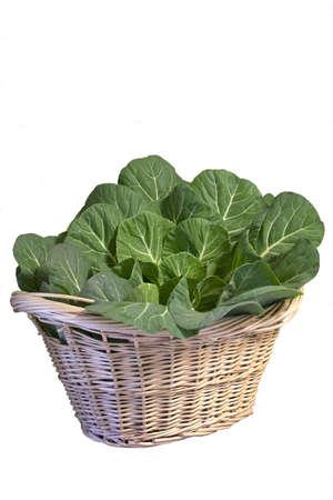 nutriments: Basket of Fresh Collard Greens Stock Photo