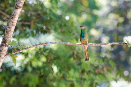 Blue-bearded Bee-eater hold on the branch above their nest