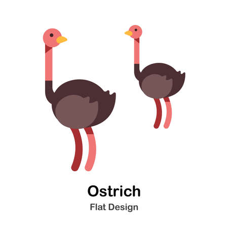 Ostrich flat illustration Vettoriali