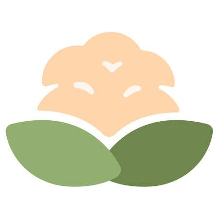 Cauliflower icon in flat color design vector illustration