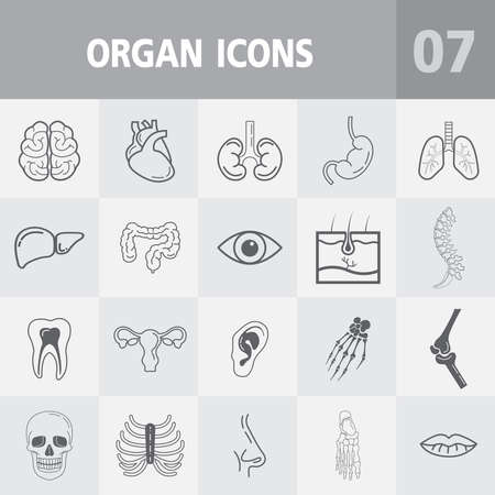 Human anatomy outline icons,Vector icons set of Internal organs and bone. - Medicine and Health symbols Illustration