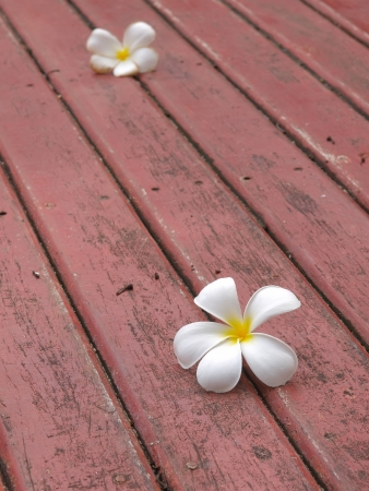 frangipani flower falling on the wooden floor  photo