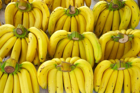 unblemished: rows of ripe yellow bananas  Stock Photo