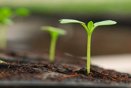 nice concept image of small plant sprout