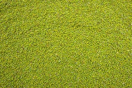 mung bean: heap of mung bean