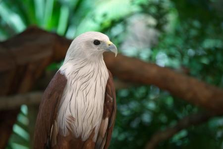 white head eagle in zoo Reklamní fotografie