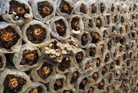 植物の養樹園のキノコ 写真素材