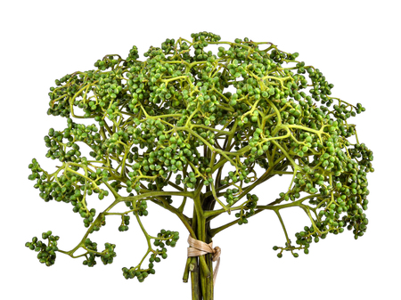 Zanthoxylum limonella Alston on white background