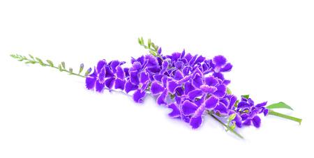 Fleur violette isolé sur fond blanc