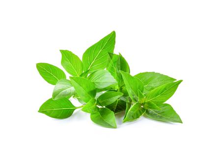 Basil leaf isolated on white background 写真素材