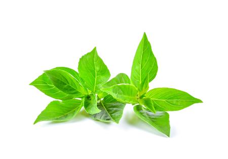 Basil leaf isolated on white background 写真素材 - 122427034