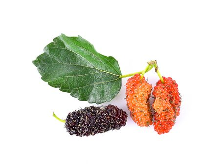 Mulberry fresh on white background
