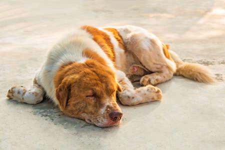 basset: Dog is sleeping on concrete floor.