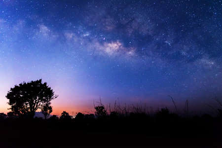 The milky way above a tree before sunrise.